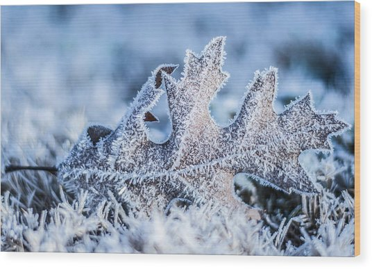 Winter Frost Wood Print