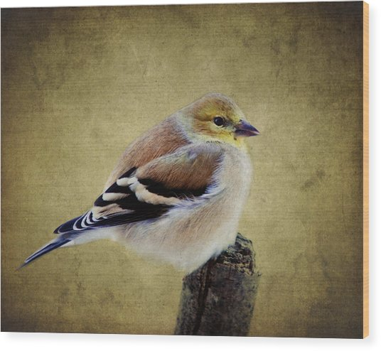 Winter Goldfinch Wood Print