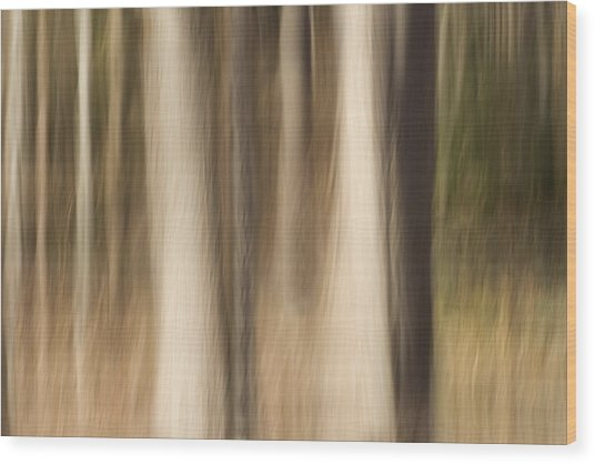 Winter Grove Wood Print