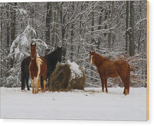 Winter Horses Wood Print