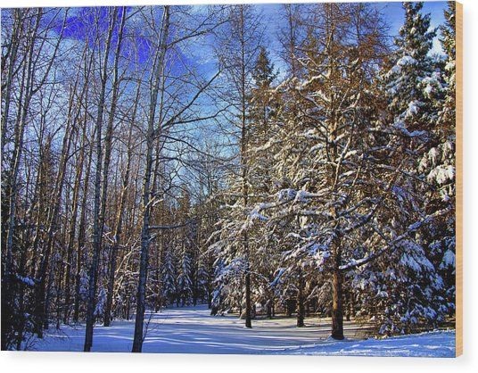 Winter In Maine Wood Print by Gary Smith