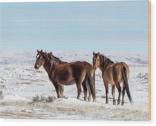 Winter In Sand Wash Basin - Wild Mustangs Wood Print