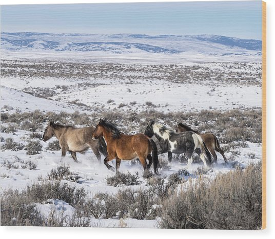 Winter In Sand Wash Basin - Wild Mustangs On The Run Wood Print