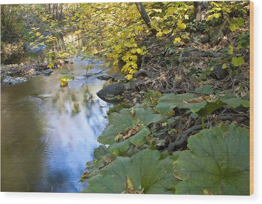 Winter Is Coming On Rock Creek Wood Print by Charlie Osborn