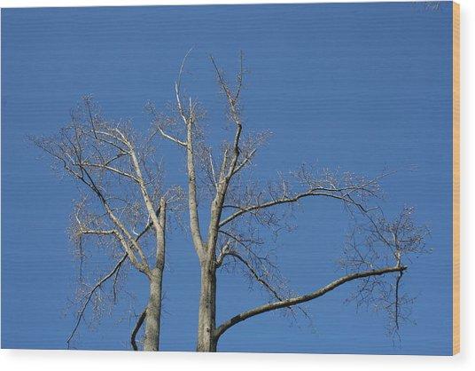 Winter Look Wood Print by Magda Levin-Gutierrez