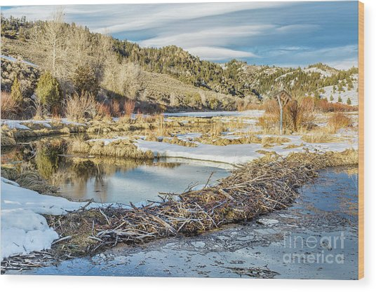 Winter On Beaver Swamp Wood Print