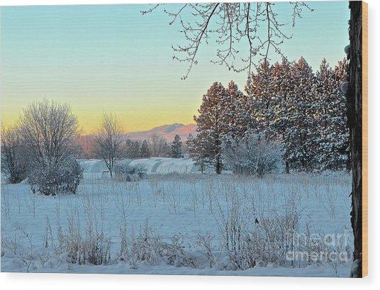 Winter On The Tree Farm Wood Print