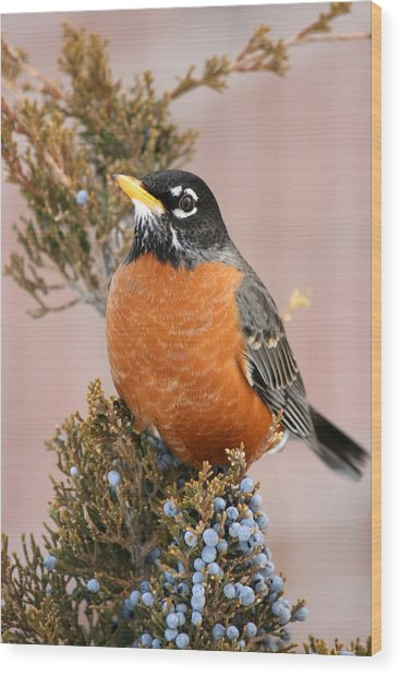 Winter Robin Wood Print