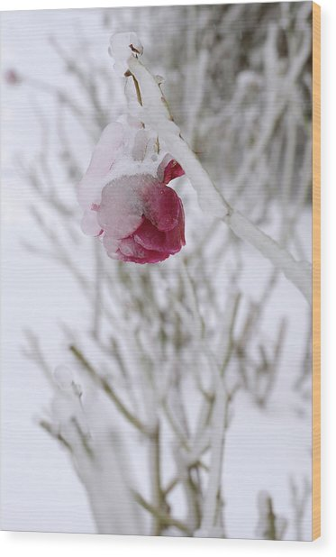Winter Rose Wood Print