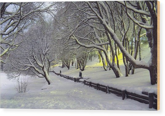Winter Scene 1 Wood Print by Sami Tiainen
