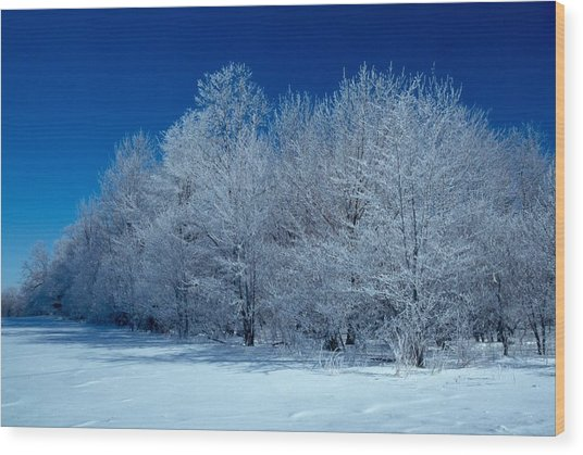 Winter Scene Wood Print by Raju Alagawadi