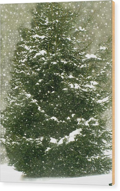 Winter Shines Over Pine Wood Print