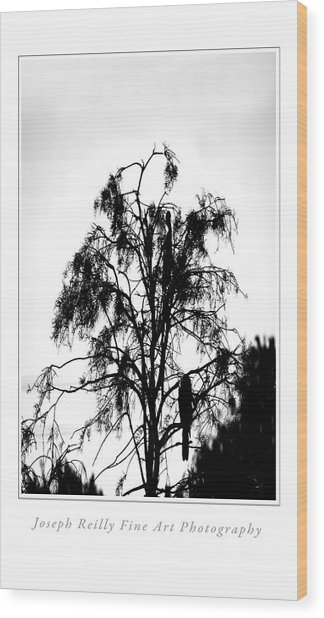 Winter Sky Wood Storks Wood Print by Joseph Reilly