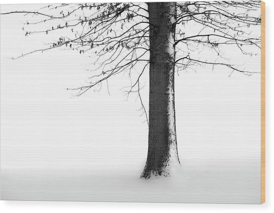 Winter Solitude Wood Print