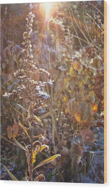 Winter Sun Texture Wood Print by JAMART Photography