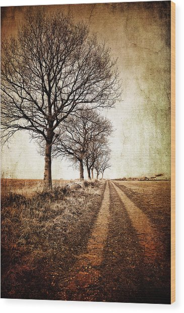 Winter Track With Trees Wood Print