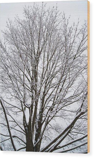 Winter Tree    Poster Wood Print