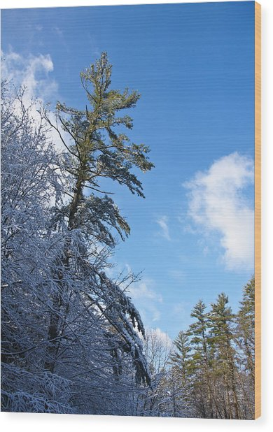 Winter Tree And Sky Wood Print by Edward Myers