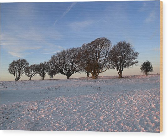 Winter Trees On The Ring Wood Print
