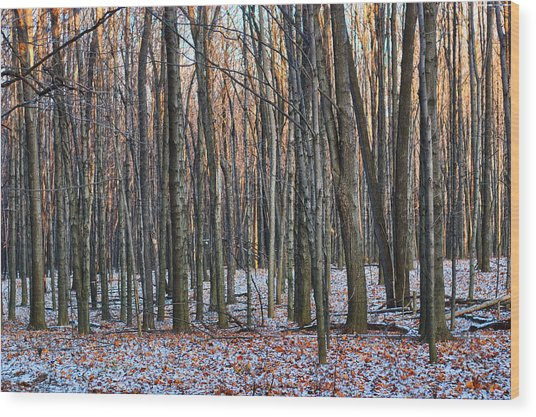 Winter - Uw Arboretum Madison Wisconsin Wood Print
