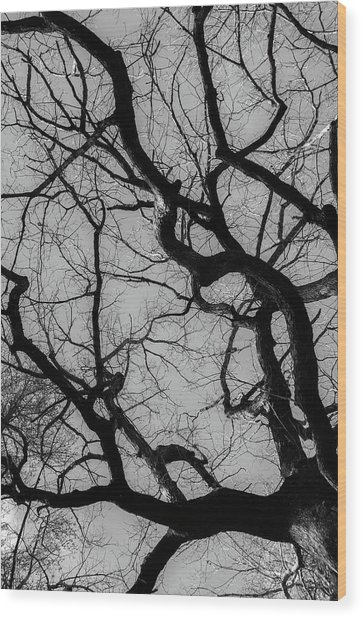Winter Veins Wood Print