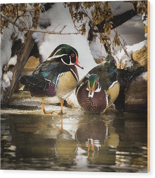 Winter Visitors - Wood Ducks Wood Print