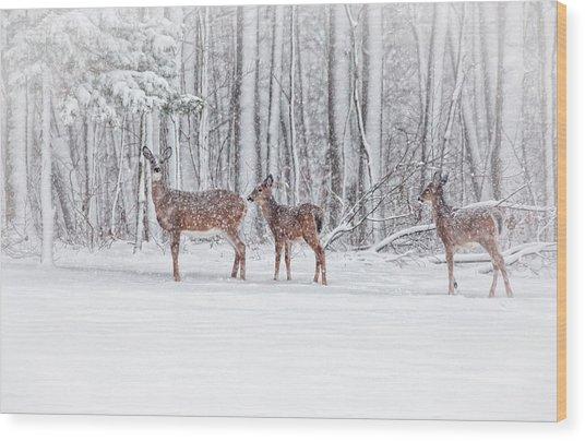 Winter Visits Wood Print
