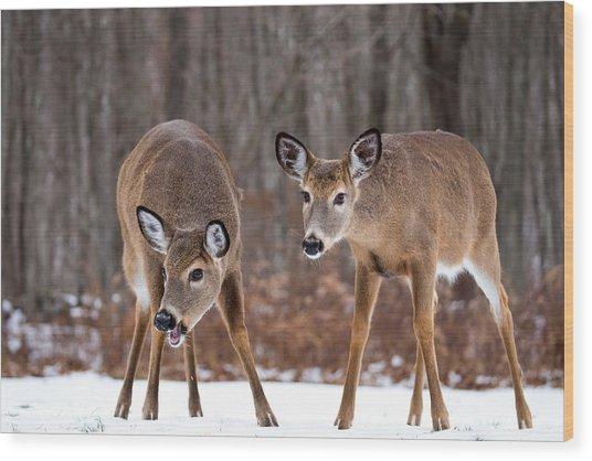 Winter White Tail Deer Wood Print