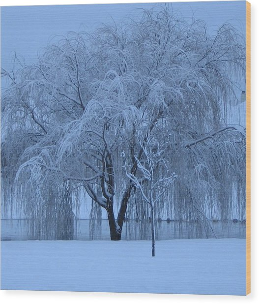 Winter Willow Tree Before Dawn_fort Worth_tx Wood Print