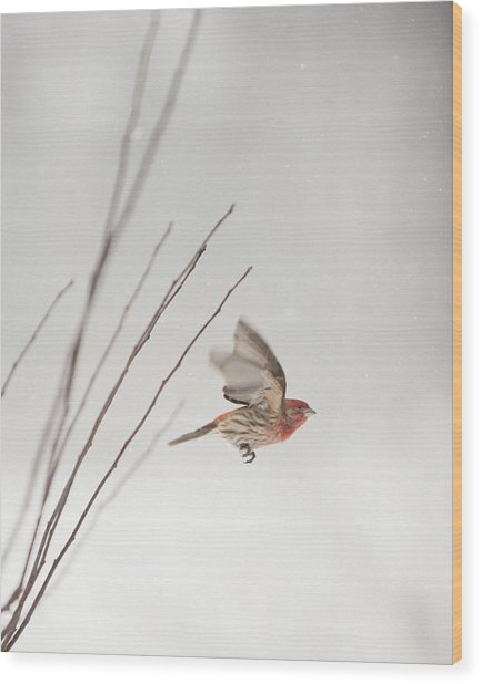 Winter Wind Surfing 1 Wood Print