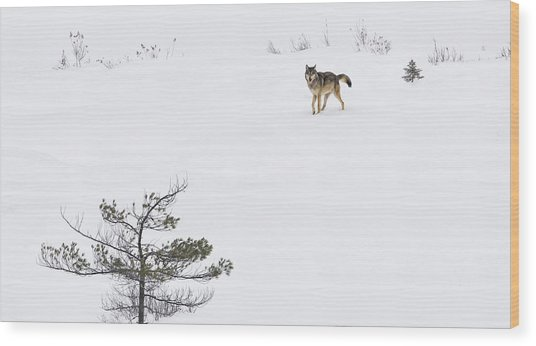 Winter Wolf Wood Print