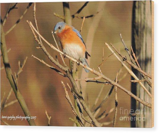 Winter's Bluebird  Wood Print