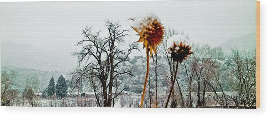 Winters Field Wood Print
