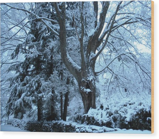 Winter's Touch Wood Print by Karen Moulder