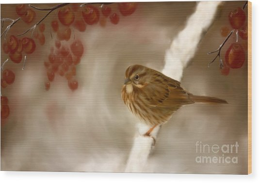 Wintertime Sparrow Wood Print