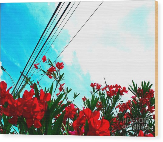 Wire Flowers Wood Print by Chuck Taylor