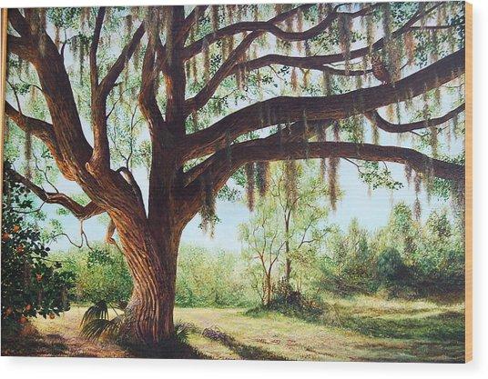 Wise Old Oak Wood Print