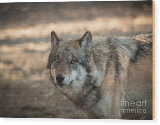 Wise Wolf Wood Print