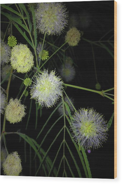 Wishing On A Star Wood Print