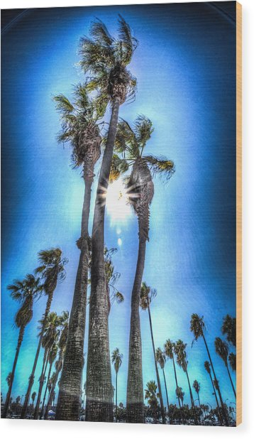 Wispy Palms Wood Print