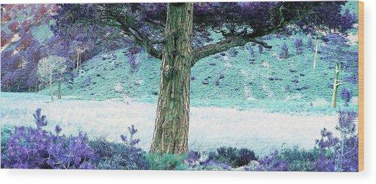 Wistful Wood Print