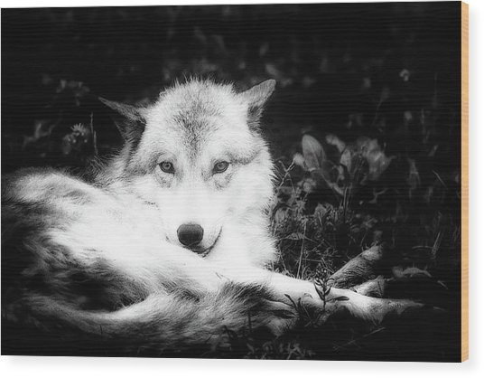 Wolf Grin Wood Print