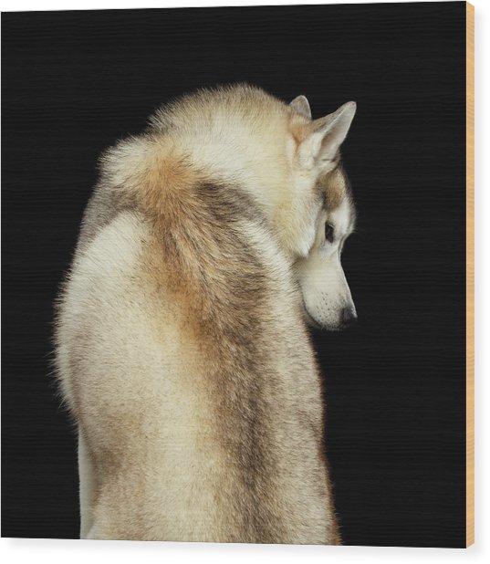 Wolf In Soul Wood Print