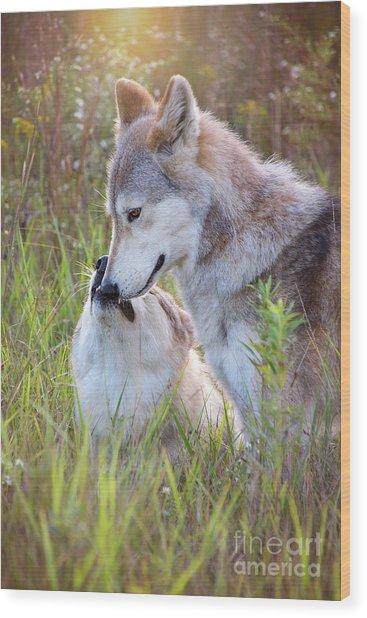 Wolf Soul Mates Wood Print