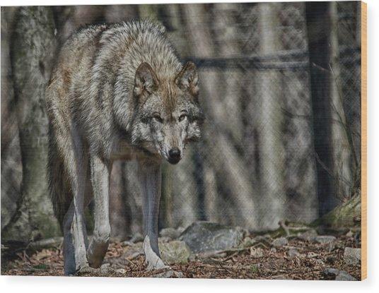 Wolf Stalking Wood Print