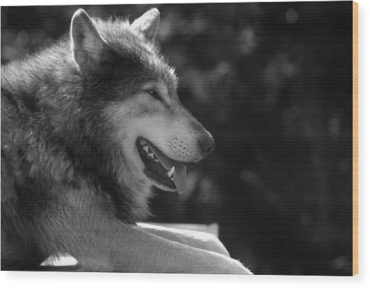 Wolfie Wood Print
