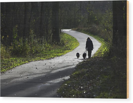 Woman And Border Collies Wood Print
