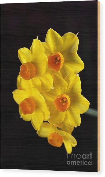 Wonderful Jonquils Wood Print