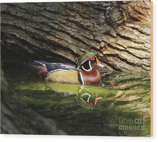 Wood Duck In Wood Wood Print