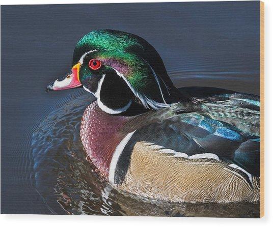 Wood Duck Portrait Wood Print